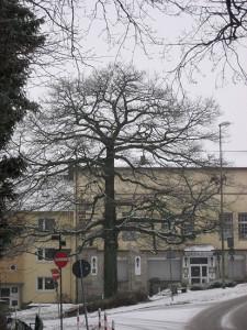 bergstrasse-2