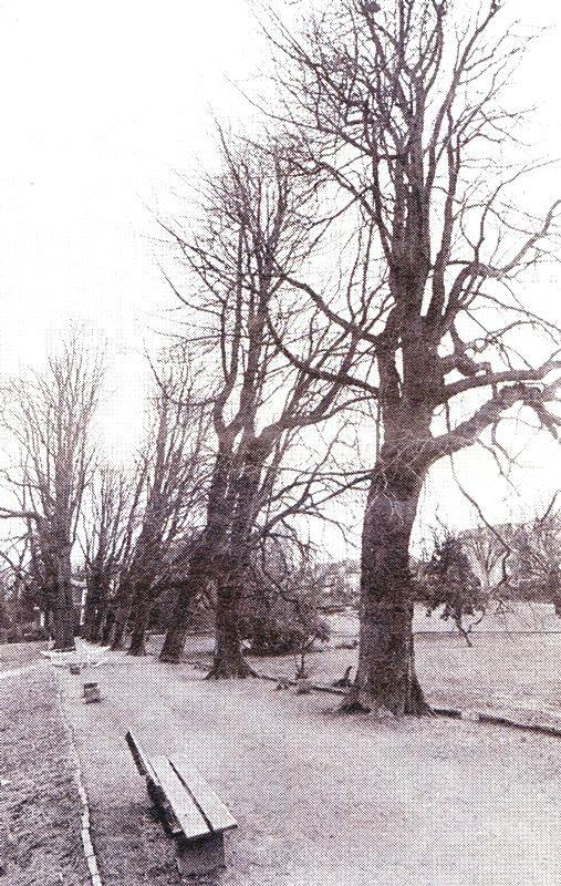 Die gelichtete Kastanienallee wurde im Jahre 1990 nach einem weiteren Baumverlust anlässlich des vorliegenden Aufsatzes noch einmal fotografiert. Lenneparchiv Schmidt